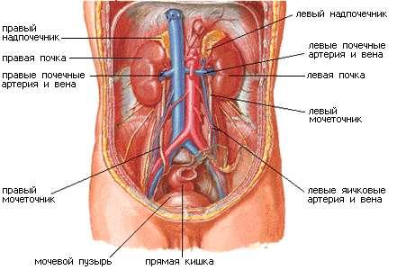 Анатомия женщины